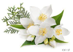 ビオロジーシャンプーアクアの香りの画像