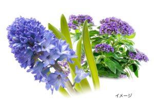 ビオロジーシャンプーリペアの香りの画像