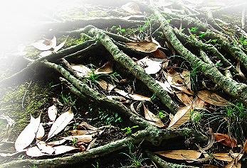 ハーブガーデンシャンプーのフルボ酸の画像