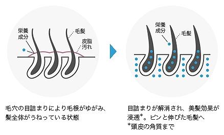 モーガンズシャンプーのアミノ酸成分の効果の画像