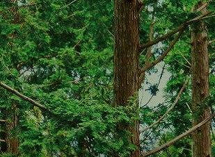 すこやか地肌シャンプーのヒノキチオールの画像